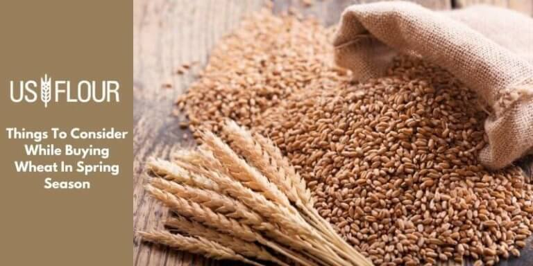 Things To Consider While Buying Wheat In Spring Season