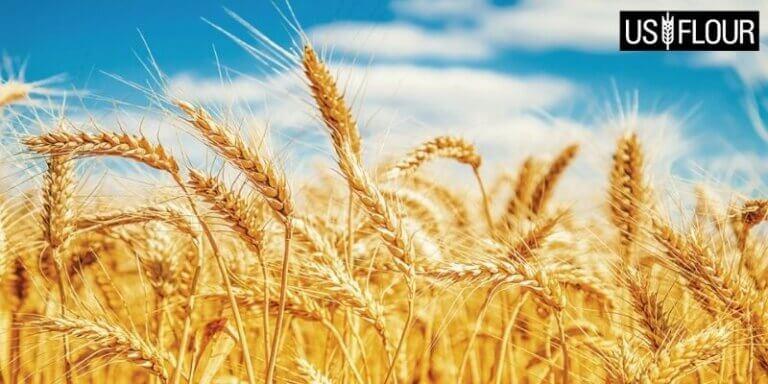 Durum wheat distributor